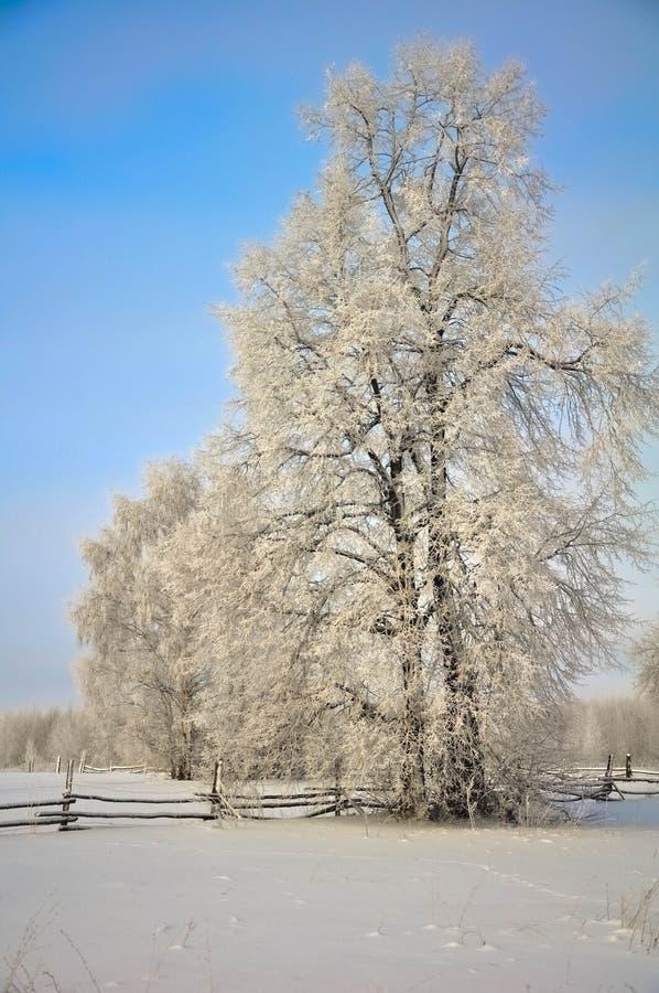 Красивое морозное утро стоковая фотография rf