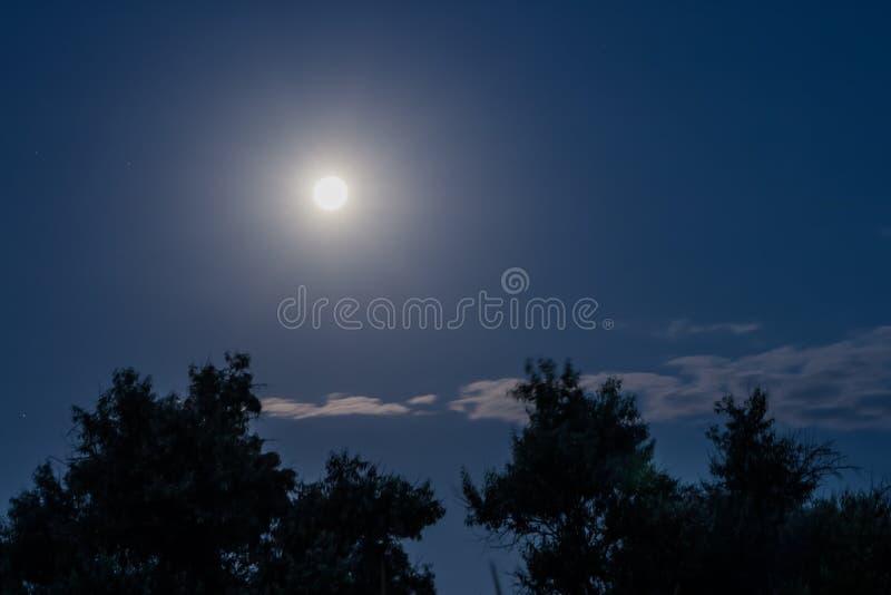 Красивое молчаливое ночное небо полнолуния над деревьями стоковое изображение