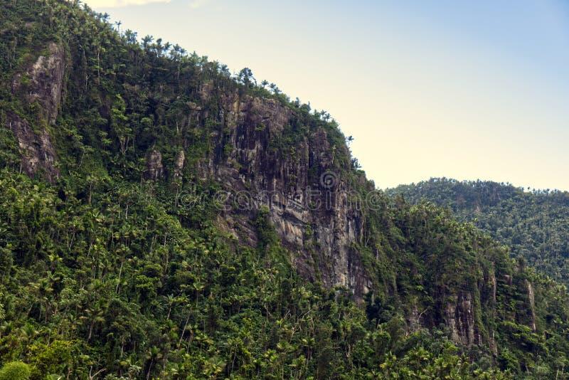 Красивое небо за тропическим лесом стоковые фотографии rf