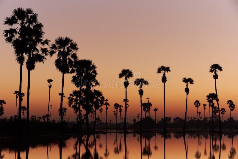 Красивое небо пальмы сахара и отражение воды в поле риса Предпосылка ясного оранжевого неба стоковая фотография rf
