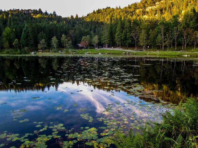 Красивое норвежское озеро стоковая фотография