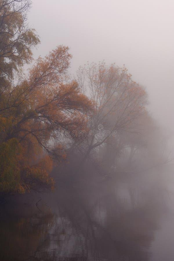 Красивое озеро с туманом в утре с ржавыми деревьями стоковая фотография