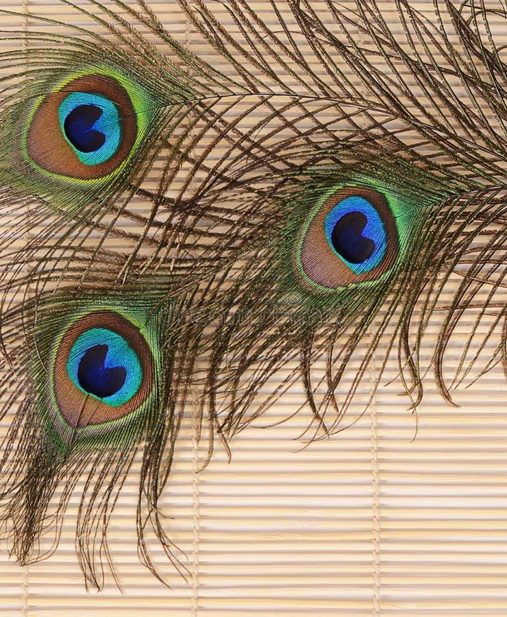 Красивое перо конца-вверх павлина стоковые изображения