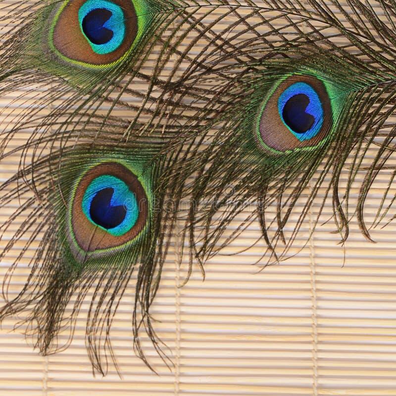 Красивое перо павлина стоковое изображение