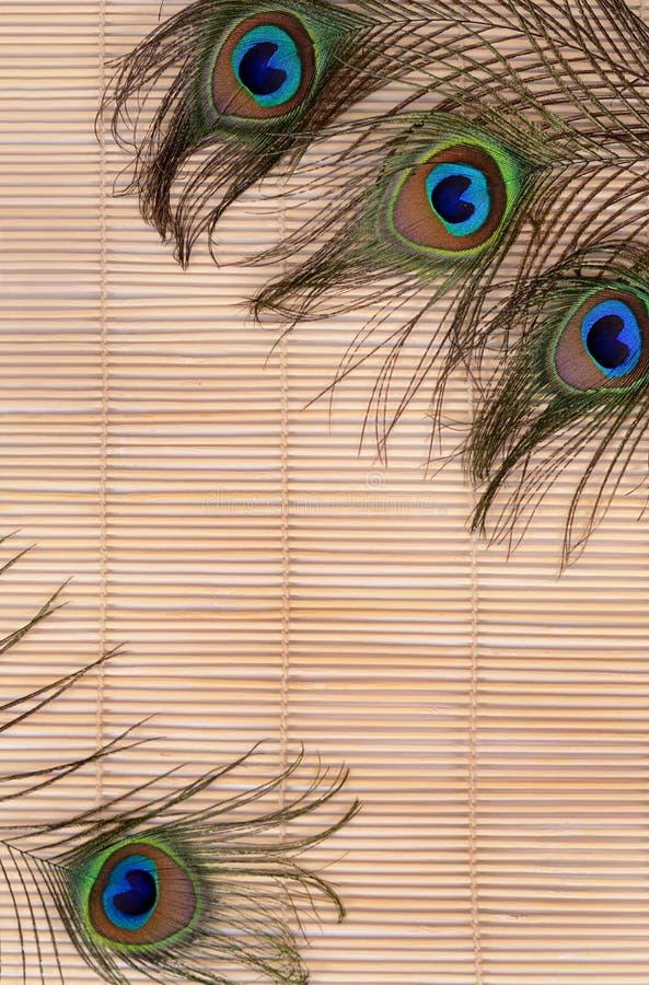 Красивое перо павлина стоковое изображение rf