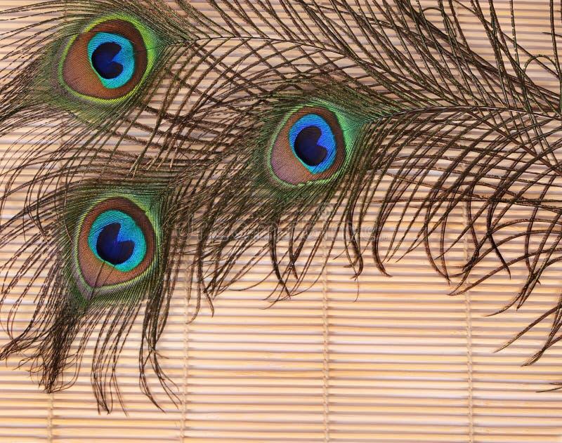 Красивое перо павлина стоковое фото rf