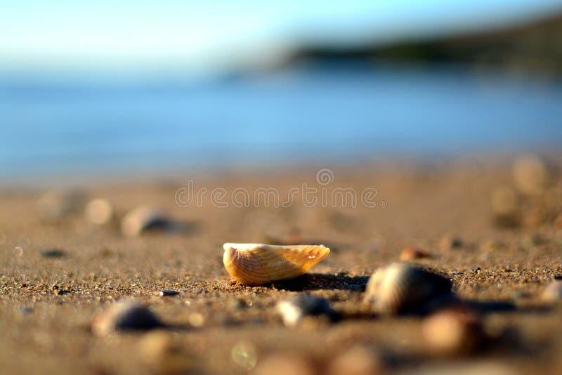 Красивое побережье моря Азова стоковые изображения