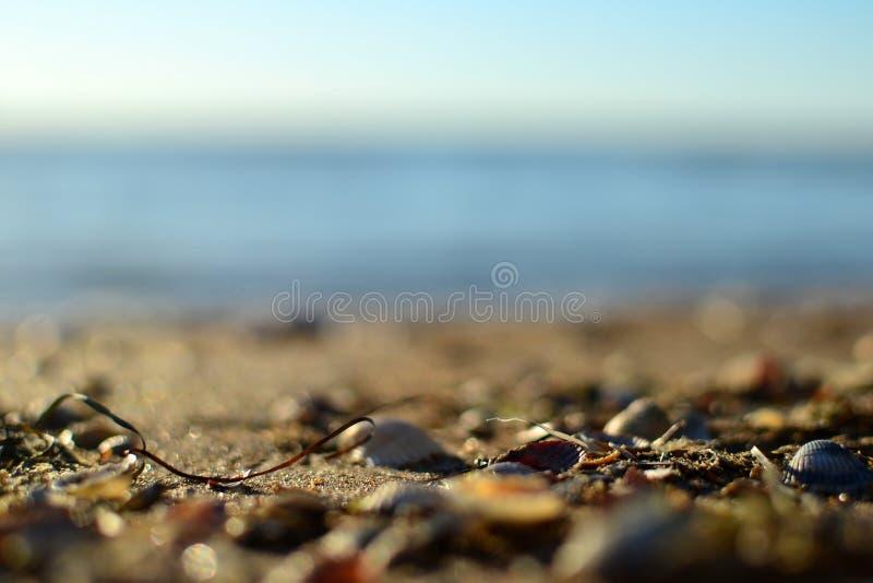 Красивое побережье моря Азова стоковые фотографии rf