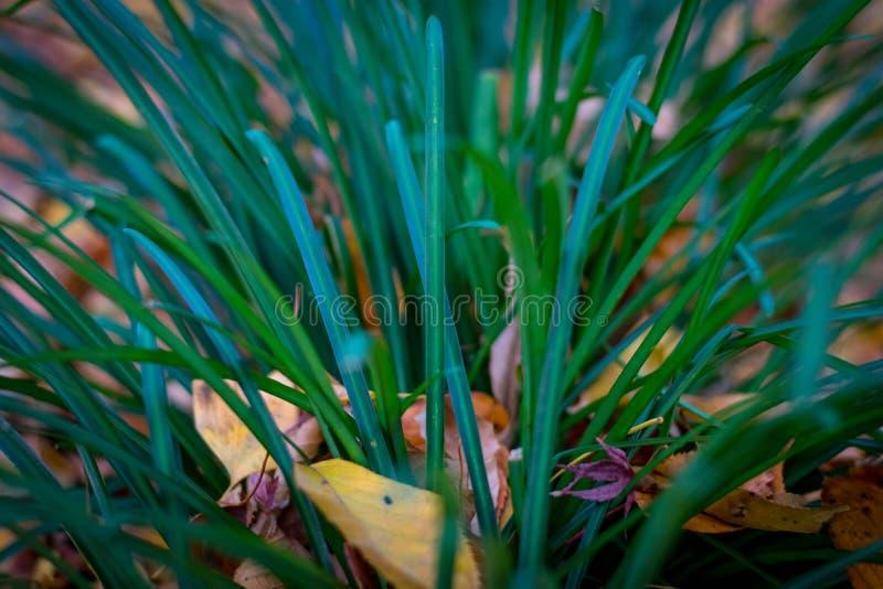 Красивое покрашенное leaves стоковое фото rf
