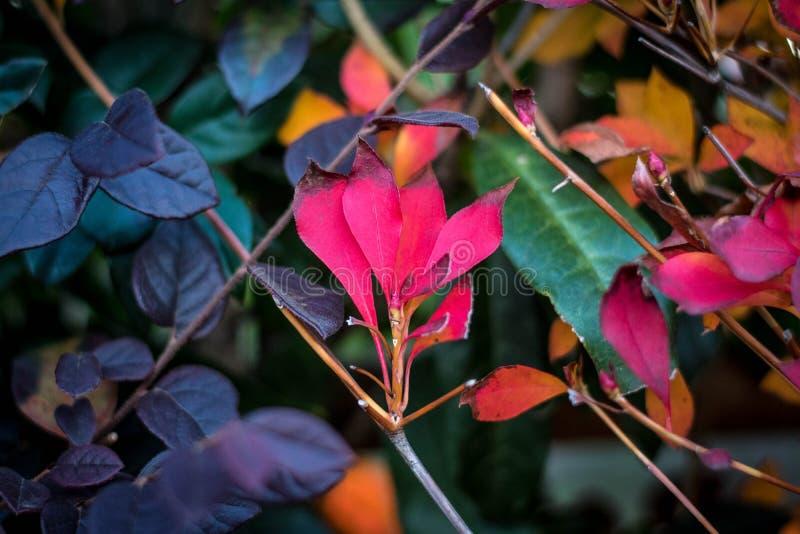 Красивое покрашенное leaves стоковые изображения rf