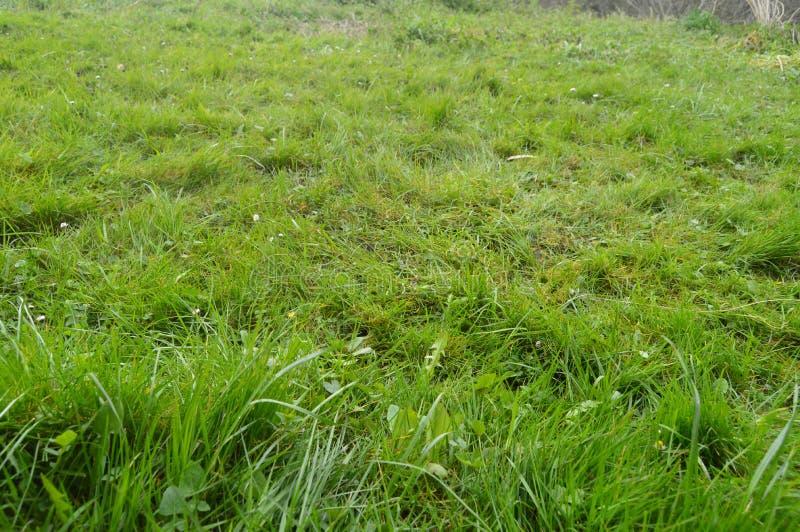 Красивое поле плотной травы в природном парке Gorbeia Ландшафты природы заводов стоковое фото