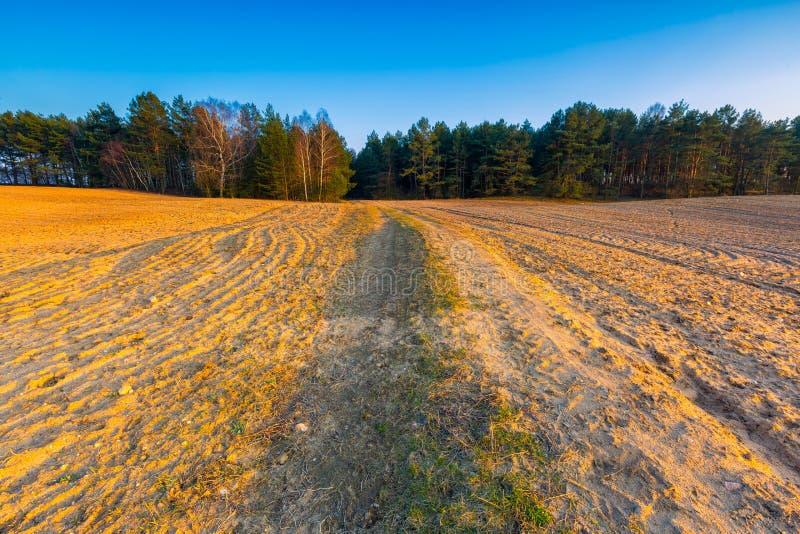 Красивое поле весеннего времени на заходе солнца стоковое изображение rf