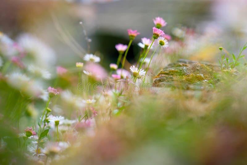 Красивое поле цветков на Брюгге, весенний сезон стоковая фотография