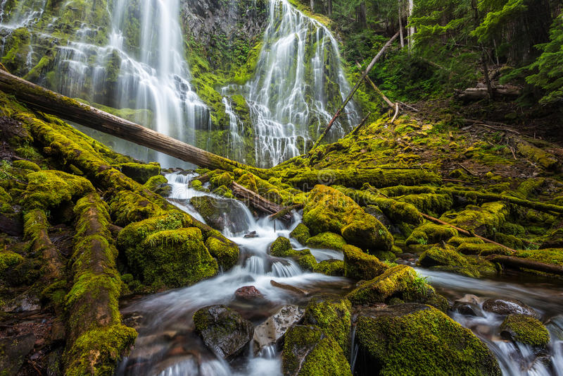 Красивое полномочие понижается в лес Орегона стоковые изображения rf