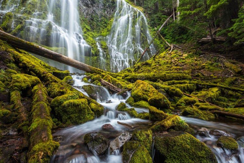 Красивое полномочие понижается в лес Орегона стоковое фото