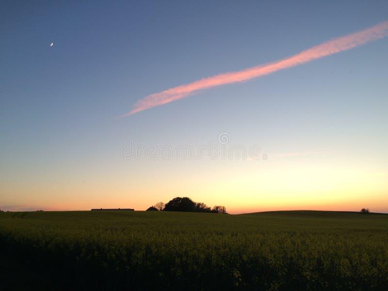 Красивое сумерк над dusky канола полем стоковая фотография rf