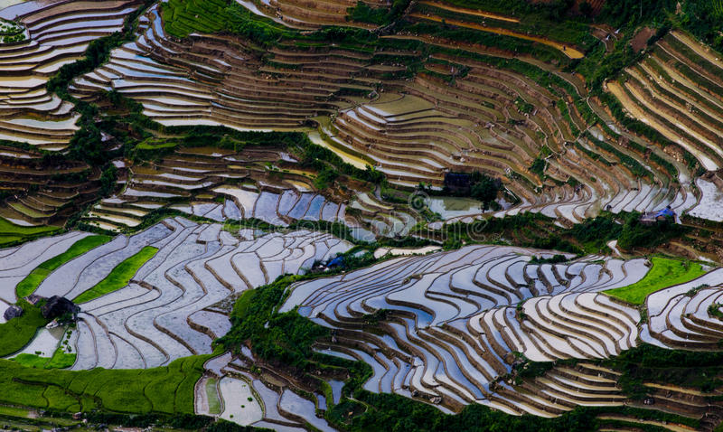 Красивое террасное поле риса в Mu Cang Chai, Вьетнаме стоковое фото