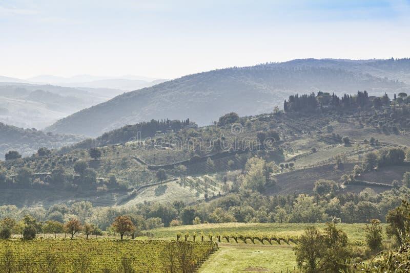 Красивое утро с некоторым туманом между холмами с виноградниками стоковая фотография
