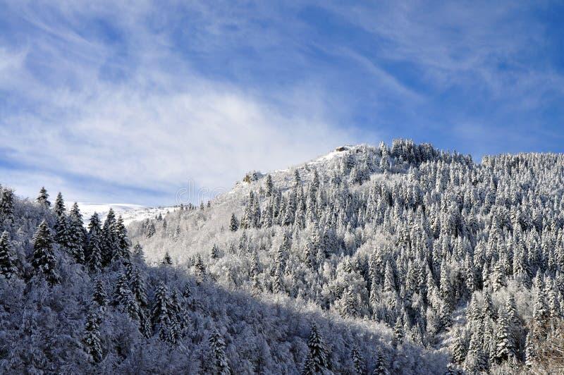 Красивое фото ландшафта леса зимы стоковое изображение rf