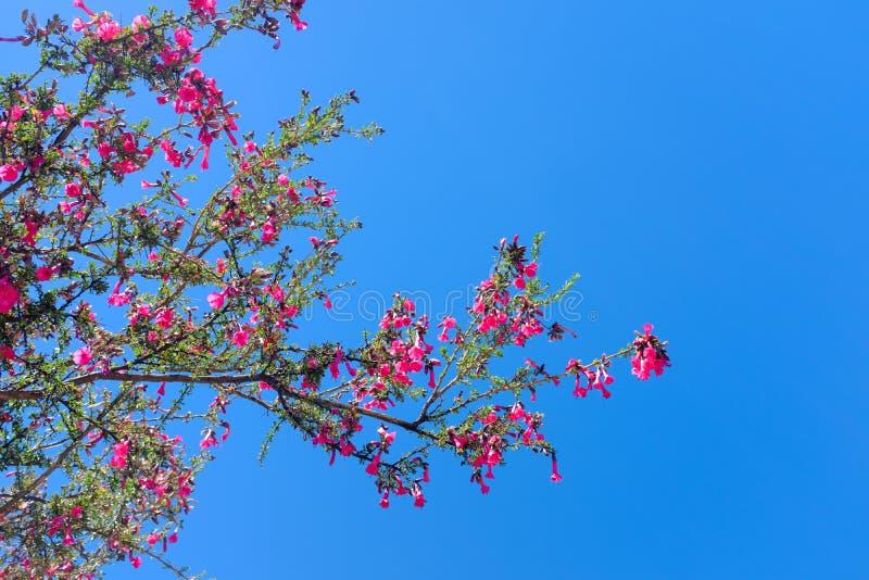 Красивое цветене завода полностью розовое стоковые фотографии rf