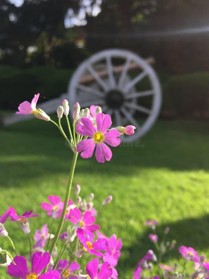 Красивое цветение цветка стоковое изображение