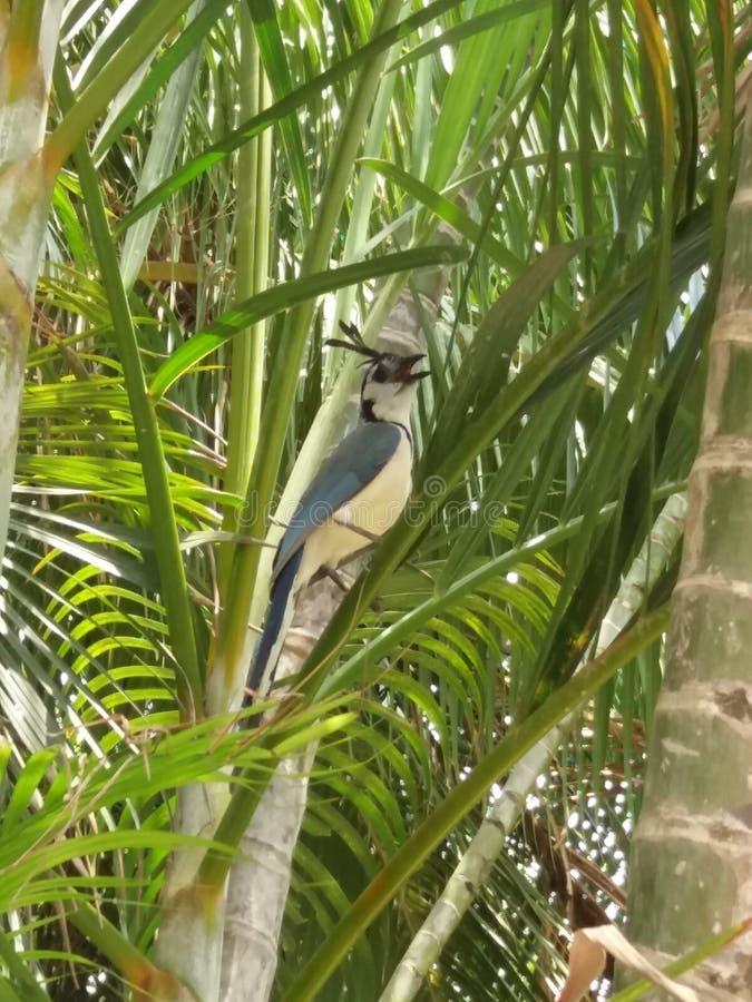 красивое exotica какаду птицы стоковые изображения rf