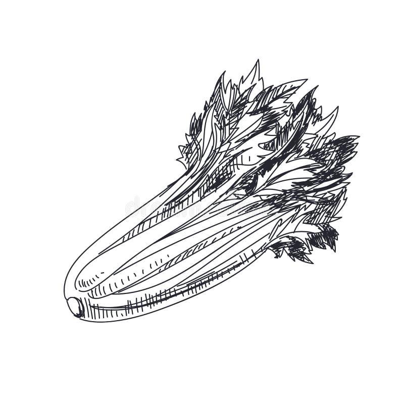 Красивой иллюстрация овощей вектора нарисованная рукой иллюстрация штока