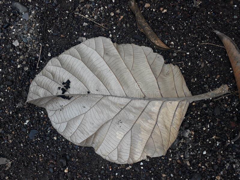 Красиво солёные листья на том основании стоковое фото