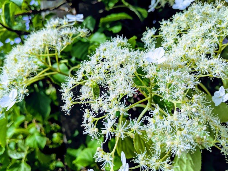 Красивые белые цветки весны стоковое фото