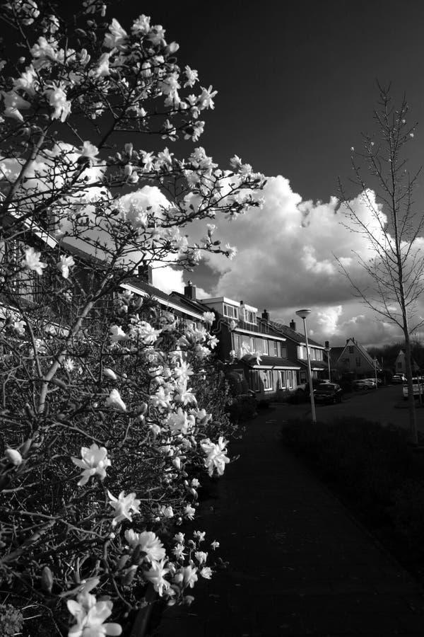 Красивые белые цветки стоковые фотографии rf