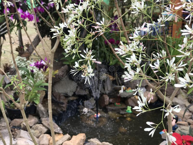 красивые белые & фиолетовые цветки стоковые фотографии rf