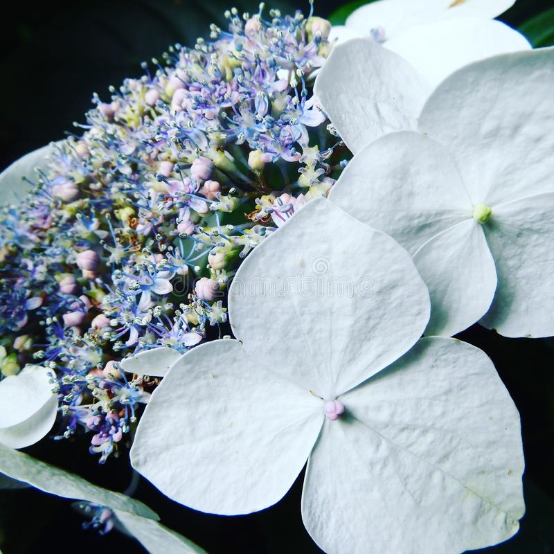 Красивые белые цветки с пастельными цветами стоковое изображение rf