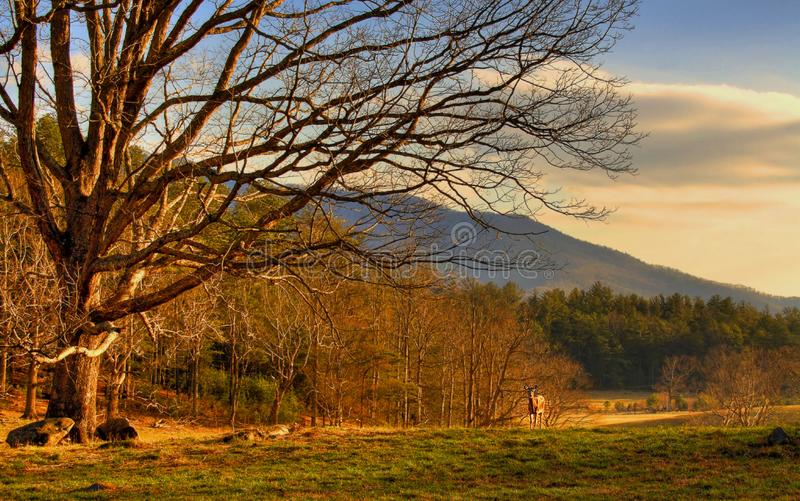 Красивые большие закоптелые горы стоковые изображения rf
