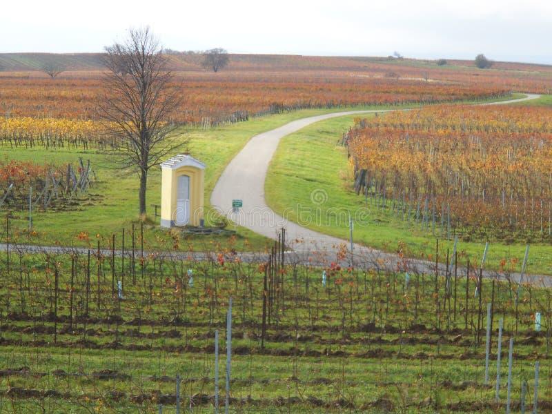 Красивые виноградники в Lutzmannsburg с улицами стоковые изображения
