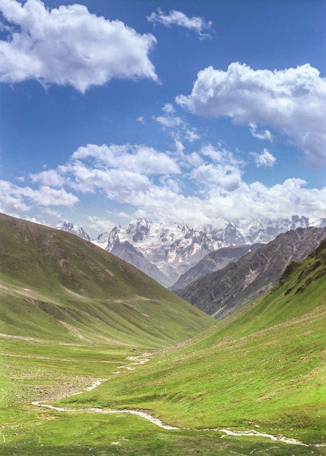 Красивые высокогорные луга стоковые фотографии rf