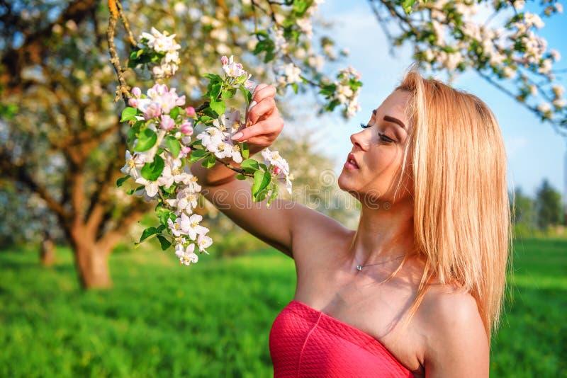 Красивые девушка и цветение яблока стоковая фотография rf