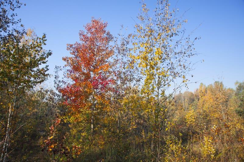 Красивые деревья и кусты осени в лесе край леса стоковая фотография rf