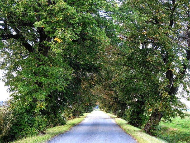 Красивые деревья, Литва стоковое изображение rf