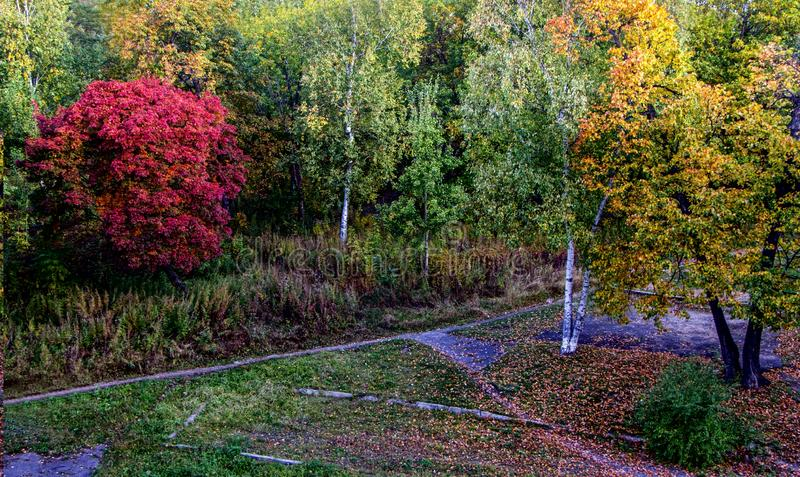 Красивые деревья осени в парке города стоковые фотографии rf