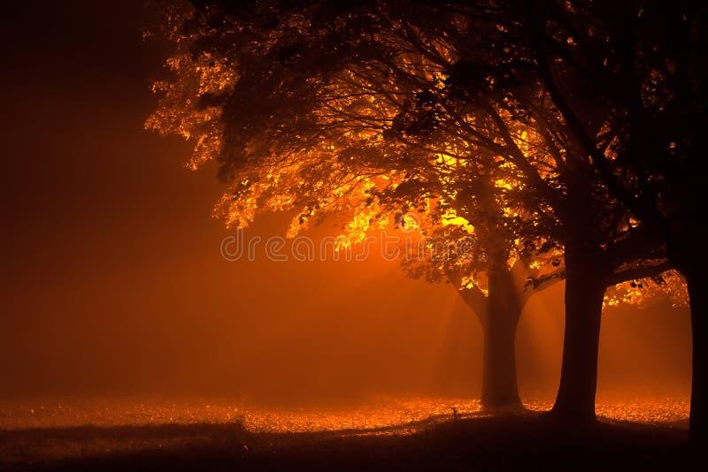Красивые деревья на ноче с оранжевым светом стоковое изображение