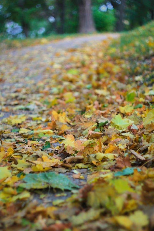 Красивые желтые и коричневые листья лежат на том основании в парке стоковое фото rf