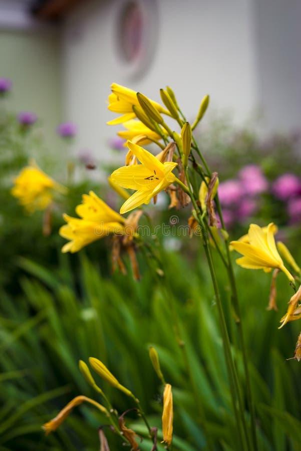 Красивые желтые цветки в ботаническом саде стоковое фото rf