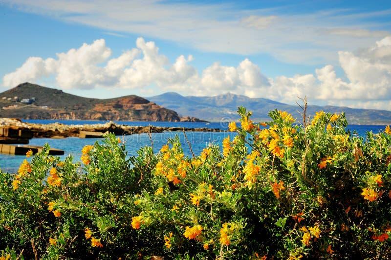 Красивые желтые цветки над морем стоковые фотографии rf