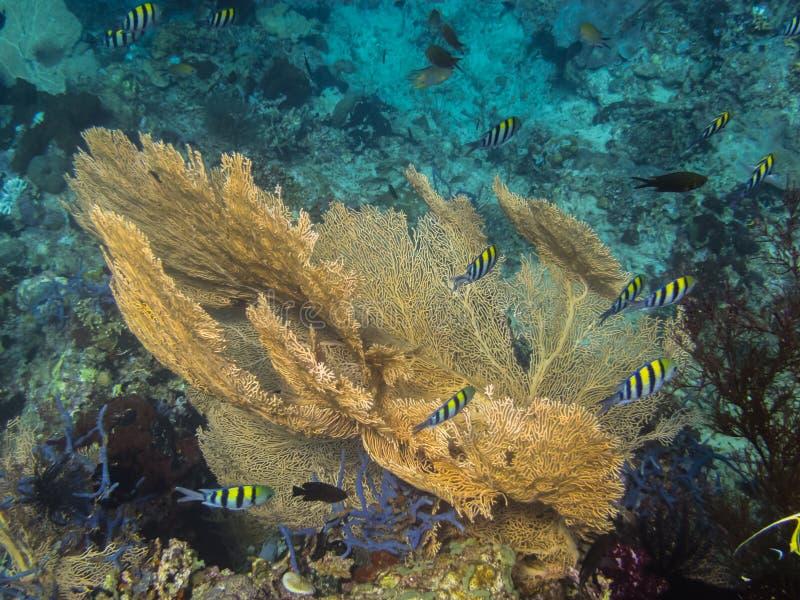 красивые желтые коралл и рыбы стоковые изображения rf
