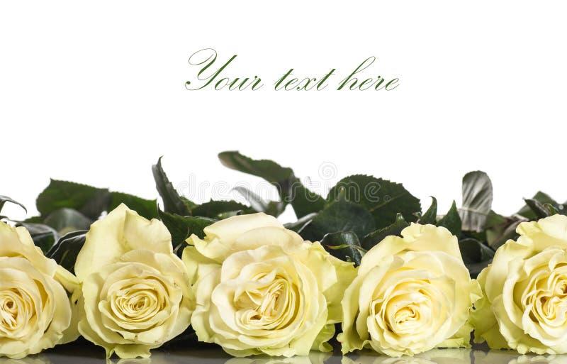 Красивые желтые розы стоковое изображение rf