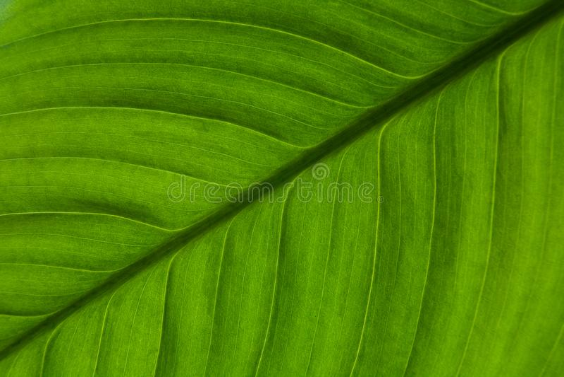 Красивые зеленые лист экзотического конца-вверх завода стоковое фото