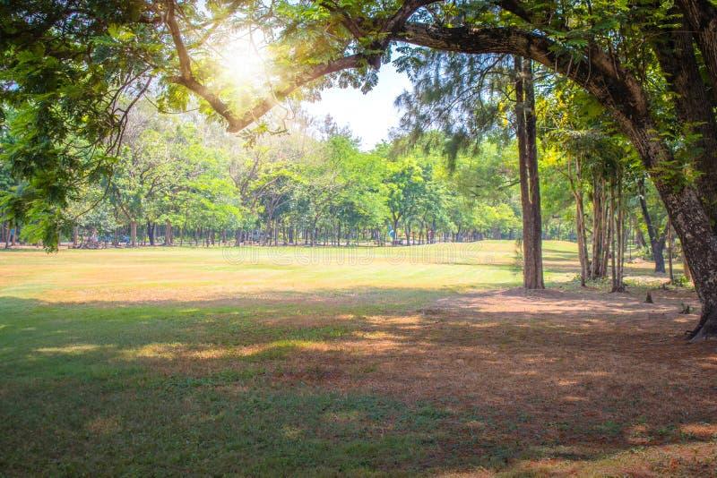 Красивые зеленые лужайка и парк ветвей деревьев публично стоковые фото