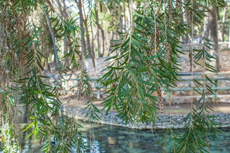 Красивые зеленые растения в парке San Vicente стоковая фотография rf