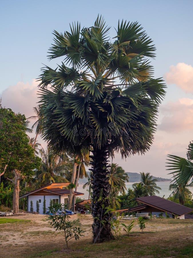 Красивые изображения на острове Phangan стоковая фотография rf