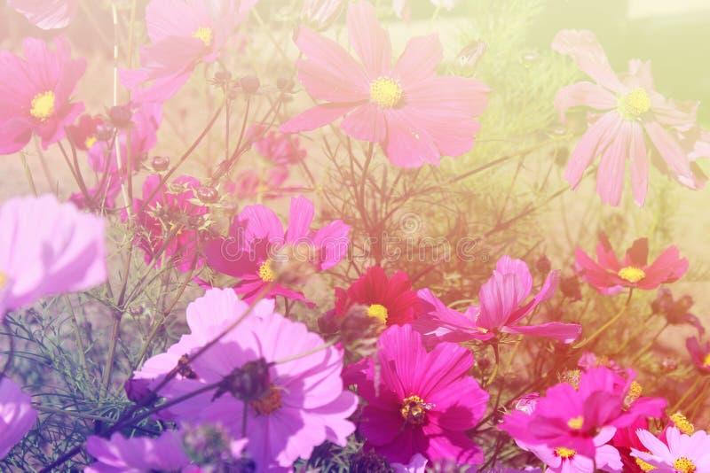 Красивые искрясь цветки стоковое фото rf